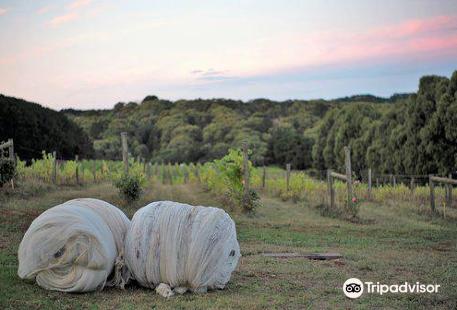 Avani Wines