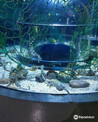 Bristol Aquarium4