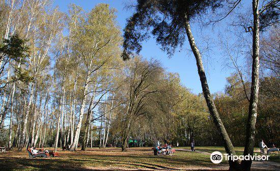 Culture Park in Powsin (Park Kultury w Powsinie)1