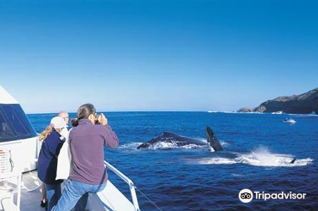 Tangalooma Island Resort Whale Watching Cruise