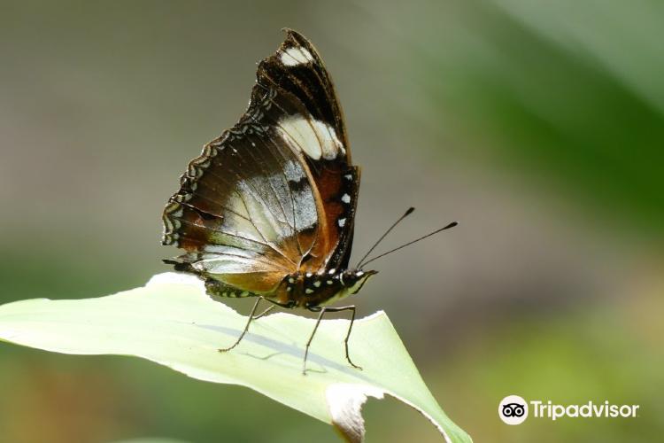 Zanzibar Butterfly Centre2