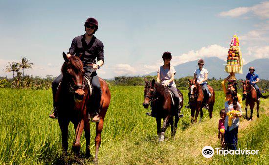 Ubud Horse Stables2