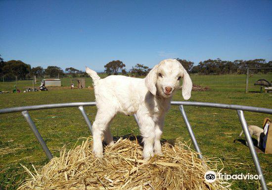 Goolwa Animal Farm