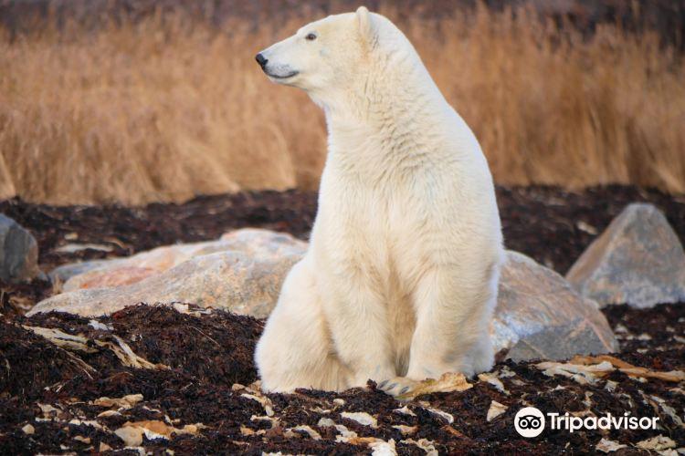 北極熊監獄1