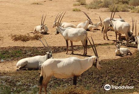 紹馬利自然保護區