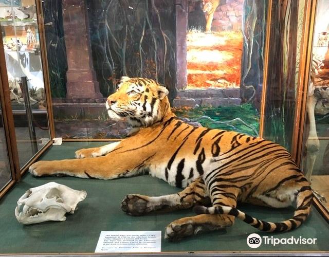 University of Aberdeen Zoology Museum3