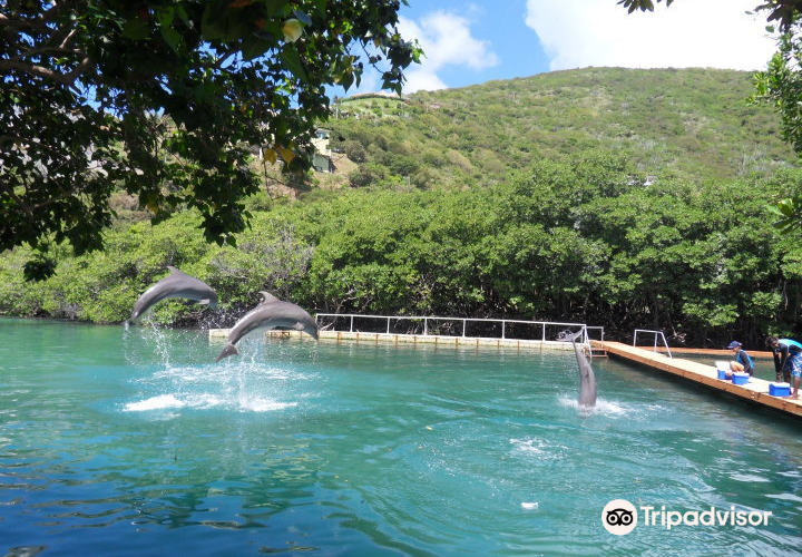 Dolphin Discovery Tortola2