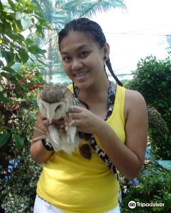 Boracay Butterfly Garden4