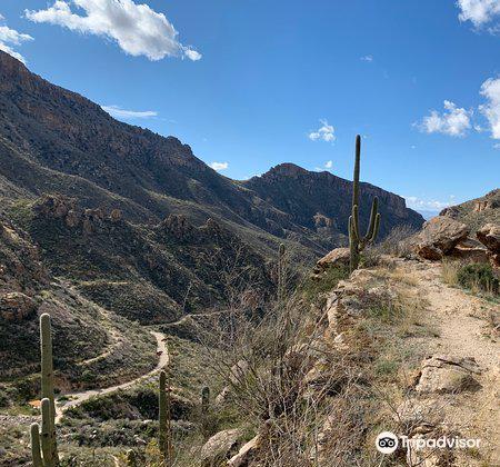 Sabino Canyon1