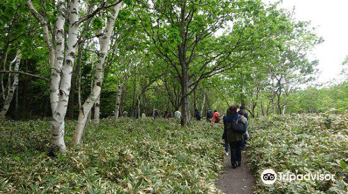 Shiretoko 100 Square-Meter Trust Forest