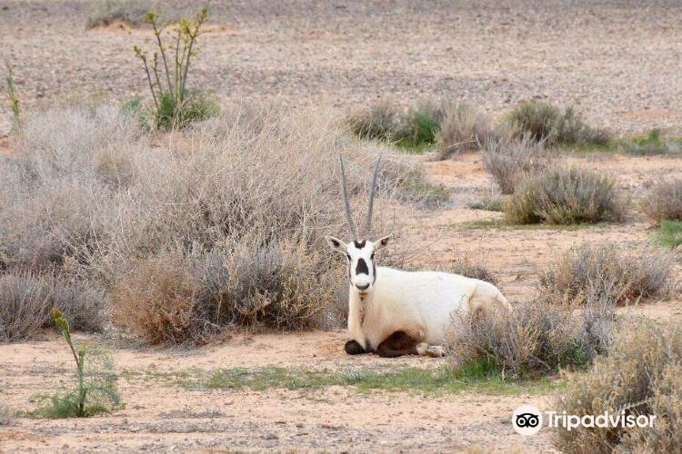 Shaumari Nature Reserve2