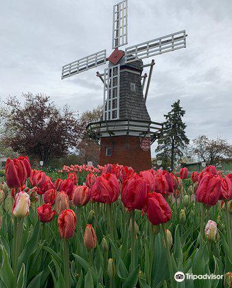 Veldheer Tulip Garden2
