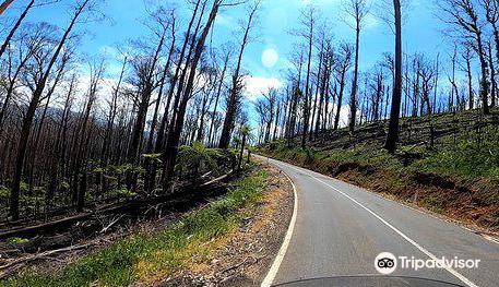 Marysville State Forest