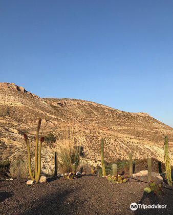 Cactus Nijar4