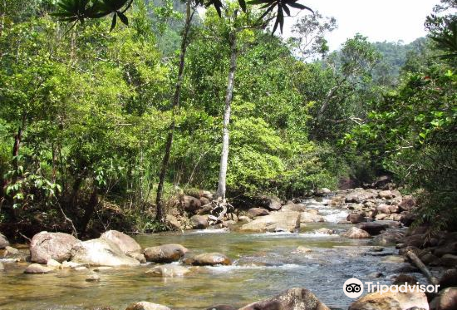Kanneliya Rain Forest Reserve