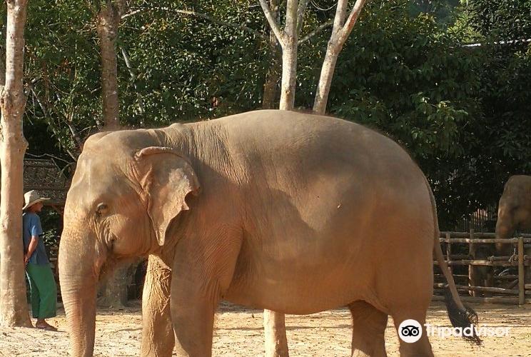 Elephant Jungle Sanctuary Phuket3