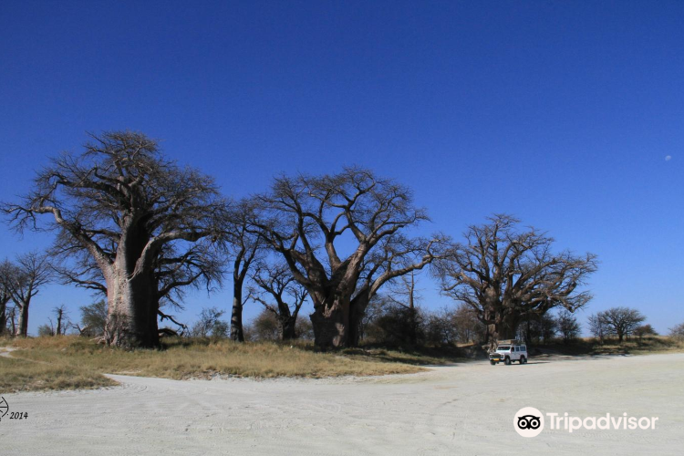 Baines Baobabs3