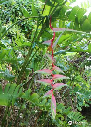 Hana Maui Botanical Gardens2