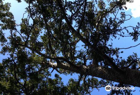 Onetangi Forest and Bird Reserve
