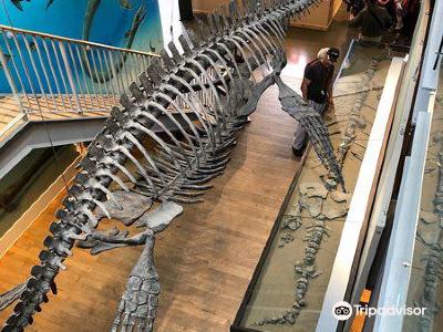 Courtenay & District Museum & Paleontology Centre