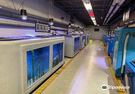 Woods Hole Science Aquarium1