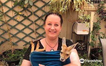 Josephine's Gallery & Kangaroo Orphanage