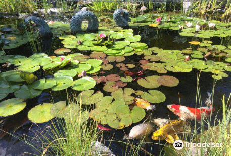 Okanagan Koi and Water Garden