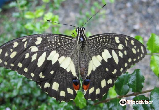 Boracay Butterfly Garden2