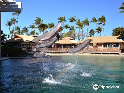 尋訪海豚之旅