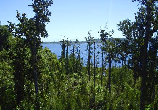 West Coast Treetop Walkway4