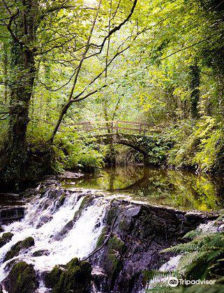 Dun A Ri Forest Park4