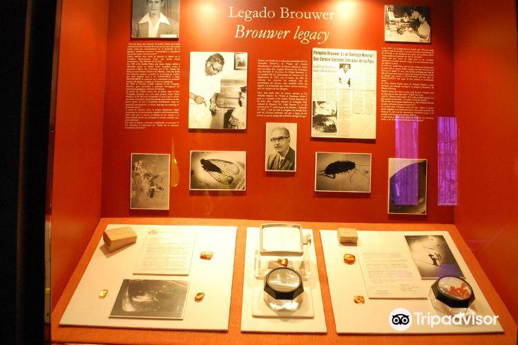 Museo Mundo de Ambar2