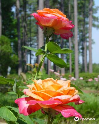 Gardens of the American Rose Center4