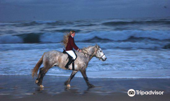 Selsdon Park Estate Beach Horse Rides