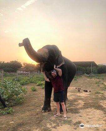 大象奇跡觀光農場4