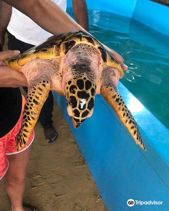 Ahungalla Sea Turtles Conservation And Research Center