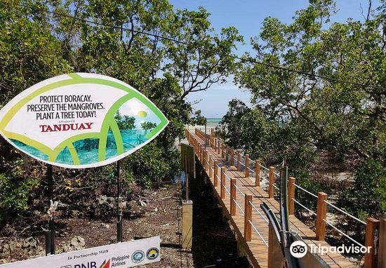 Mangrove Nursery2