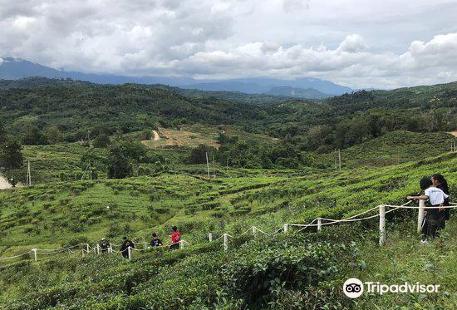 Sabah Tea Garden Day Tours