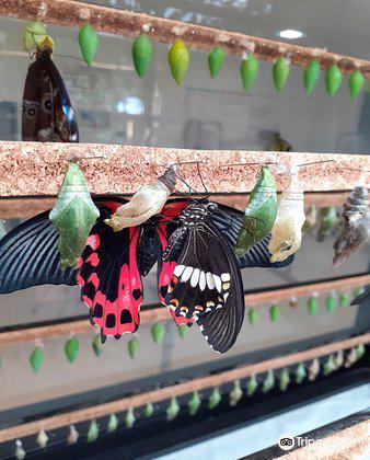 Butterfly Park of Benalmadena4