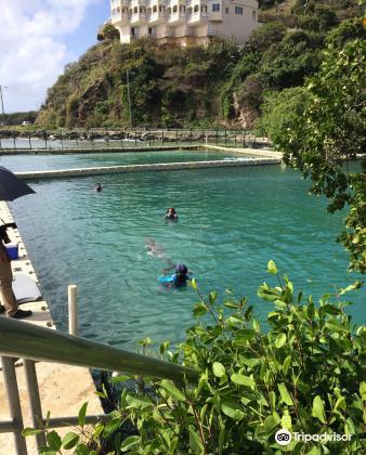 Dolphin Discovery Tortola3