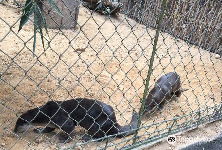 吴哥生物多样性保护中心