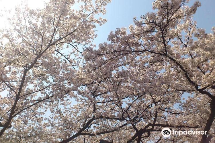 松川公園4