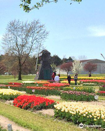 Veldheer Tulip Garden3