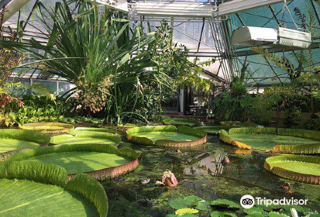 Füvészkert - Botanical Garden of ELTE