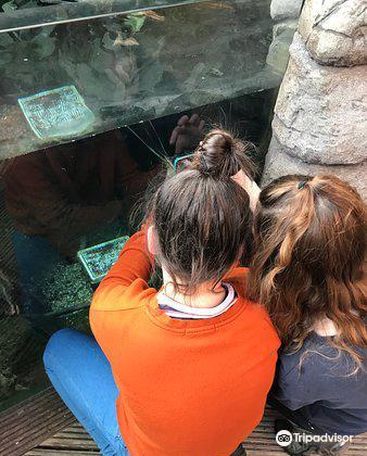 Bristol Aquarium1