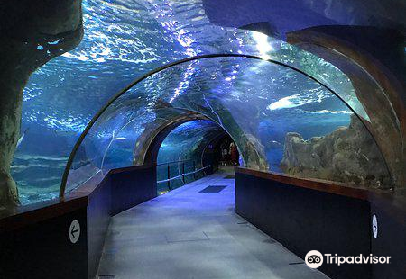 聖塞瓦斯蒂安水族館