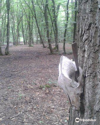 Hoia Baciu Forest2