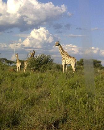 Mafikeng Game Reserve