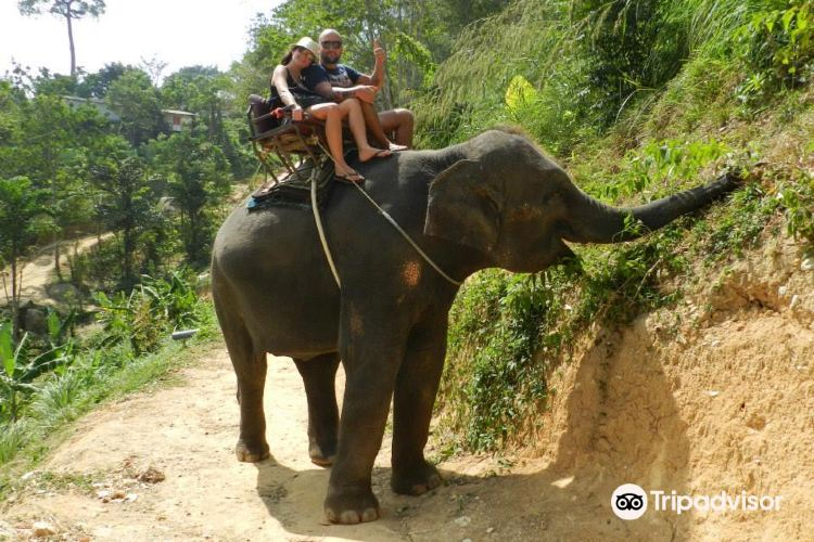 KokChang Safari Elephant Trekking