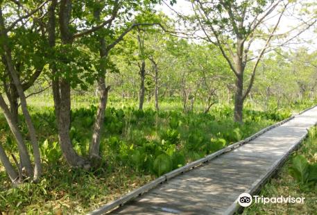 Kiushito Wetland